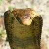 Spreekbeurt Slangen