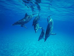 spreekbeurt dolfijnen