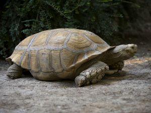 Spreekbeurt Schildpad