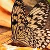Spreekbeurt over Vlinders, WOW!