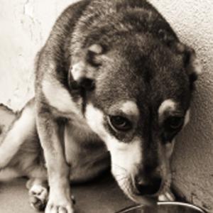 Spreekbeurt over dierenmishandeling en dierenbescherming [ingezonden]