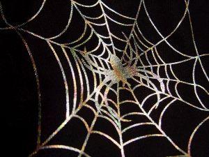 Spreekbeurt over Spinnen