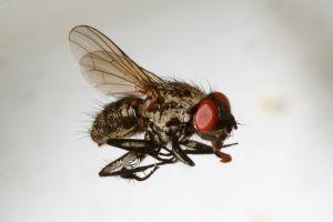Spreekbeurt over Insecten