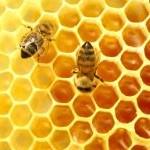 bijen en honing