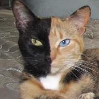Kat met twee gezichten