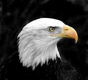 Spreekbeurt over Roofvogels