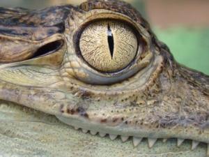 Spreekbeurt over Krokodillen, echt stoer!