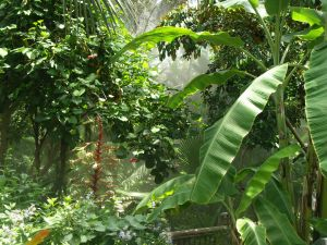 Spreekbeurt over het Tropisch Regenwoud